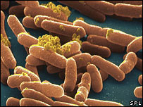 Salmonella typhimurium (SPL)