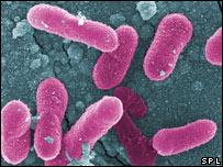 Bacteria de la Salmonella