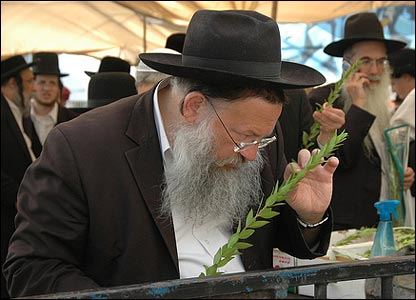 Man inspecting myrtle tree bough