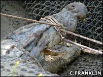 Croc (Craig Franklin)