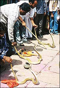 Lines of snakes on the ground