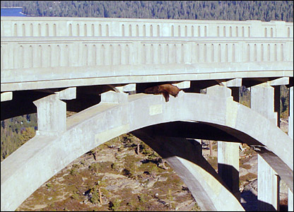 The bear looks out after scrambling to safety underneath the bridge
