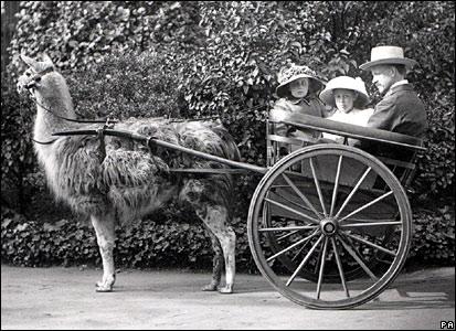 Llama carriage