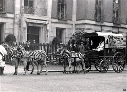 Zebra ride outside ZSL's offices, June 1914