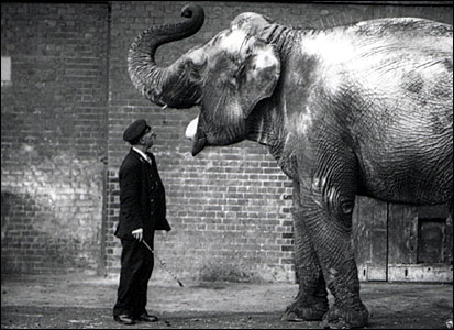 Keeper and elephant, 1914