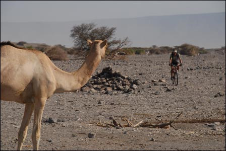 Jason Lewis in Djibouti, East Africa with camel - 2007 (Copyright Expedition360.com)
