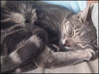Yoshi the cat