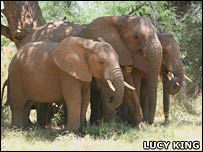 Elephants. Image: Lucy King