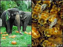 Elefantes y abejas