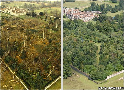 Knole Park, Kent, had 70% of its trees felled in the storm (left)
