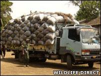 Charcoal truck (Image: WildlifeDirect)