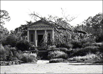 Tree brought down on King William Temple after 1987 storm (pic: RBG Kew)