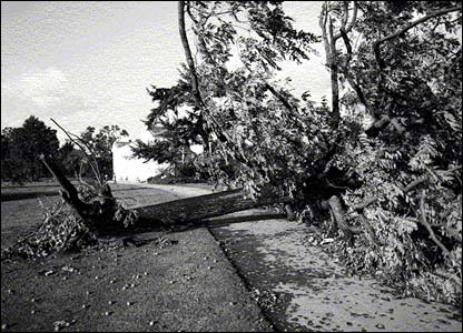 Devastation at Kew Gardens after the 1987 storm (pic: RBG Kew)