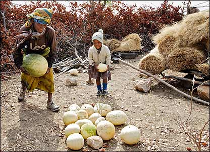 Zimbabwean grandmother, Margaret picking up melons with her grandchild