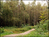 Birch trees at Toys Hill (Image: BBC)