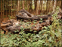 Dead wood (Image: BBC)