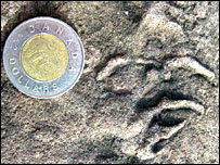 Reptile handprint (Howard Falcon-Lang, University of Bristol)