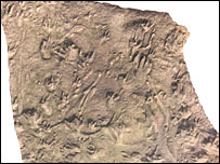Fossil reptile tracks (Howard Falcon-Lang, University of Bristol)