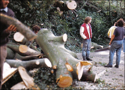 Villagers clearing trees in Holmbury St Mary, Surrey (Photo: Maurice Shevlin)