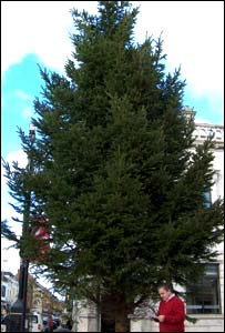 The tree has pride of place in the town - in October