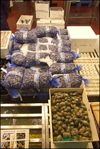 Fish market. Image: BBC