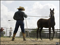 A horse trainer in Texas (file image)