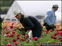 Hispanic workers in California