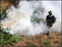 A member of the Mexican navy burns marijuana plants in an anti-drugs operation near Acapulco, Mexico