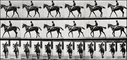 Muybridge - Horse  Vintage Collotype from Animal Locomotion 1887
