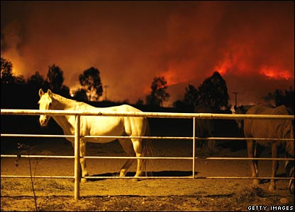 Horse in a pen in Bonita, San Diego, on Tuesday