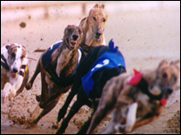 Generic picture of greyhounds racing