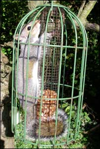 The squirrel stuck in the bird feeder before it was rescued