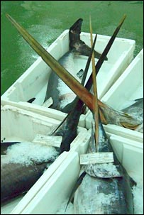 Swordfish bills. Image: BBC