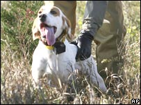 A hunting dog in Iowa