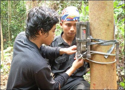 Teknisi memasang kamera survei di hutan Sumatra