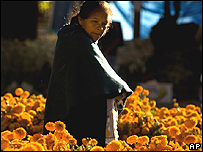 "Una mujer recoge ""cempasuchil"" (""flores de muerto"" en nahuatl) en México"