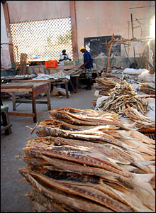 Fish drying ready for market