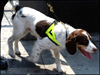 A sniffer dog, London, 2005