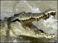 A file photo of a saltwater crocodile in Australia