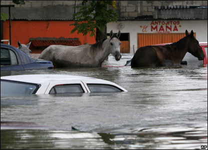 Stranded horses stands amongst submerged cars in Villahermosa, Mexico, Nov. 2, 2007
