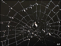 Spider's web (Image: AP)