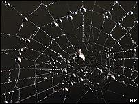 Spider's web (Image: AP)