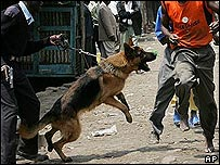 Dog attacks fleeing people