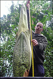 Tim Grigg with the Titan arum at the Eden Project