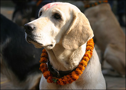 Dog on the Tihar festival in Nepal
