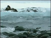 مشهد من القطب الجنوبي