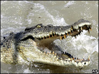 A crocodile (file image)