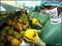 Workers of the Peruvian Food Industries Corporation process mango for export