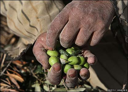 Palestinian man holds some olives
