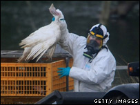 A Defra worker with a turkey to be culled